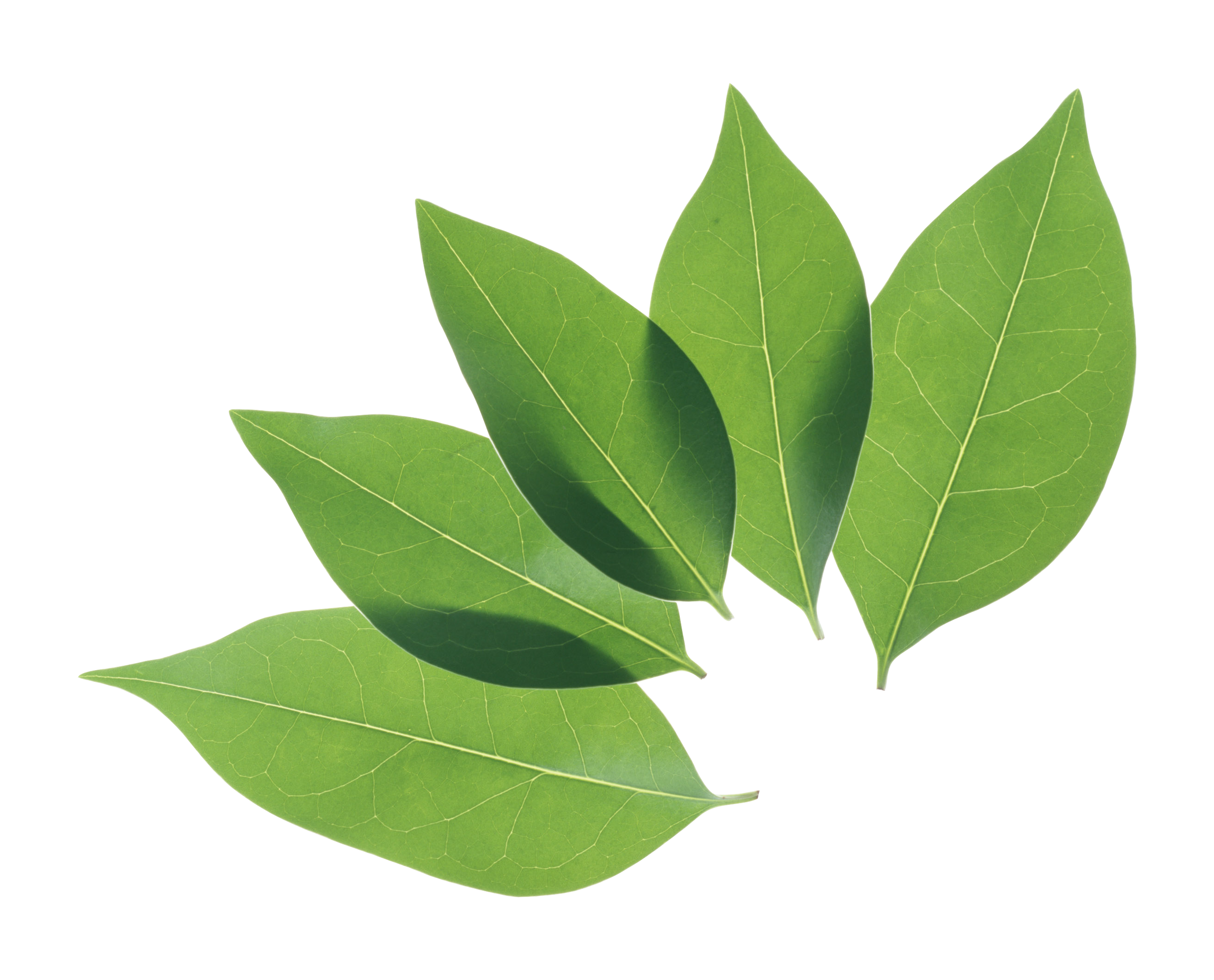 green_leaves_PNG3645